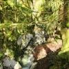 13_cascade_d-angon