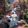 2015-11-08-twann-gorges-028